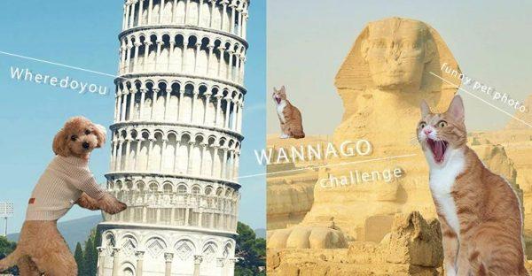 韓國IG新興「搞笑遛毛孩大法」!帶寵物環遊世界,埃及金字塔、比薩斜塔,想去邊就去邊~