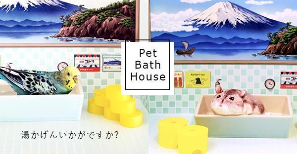 洗個熱水澡!復古可愛「富士山寵物浴池」熱騰騰登場,小鳥和倉鼠請入內泡澡吧!